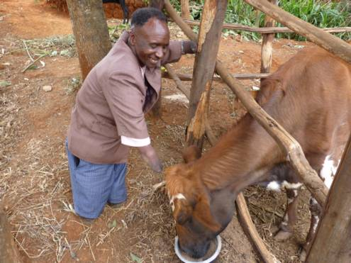 Supported family father with his single milk cow.